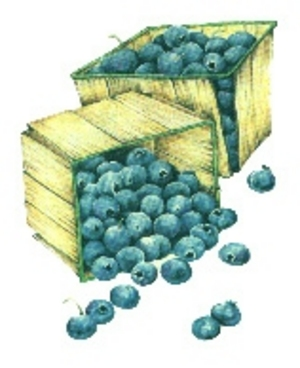 The Blueberry Story -- My Take - DaveShearon